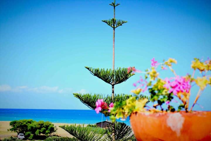 Una araucaria sul mare ! Sicilia = Poesia!