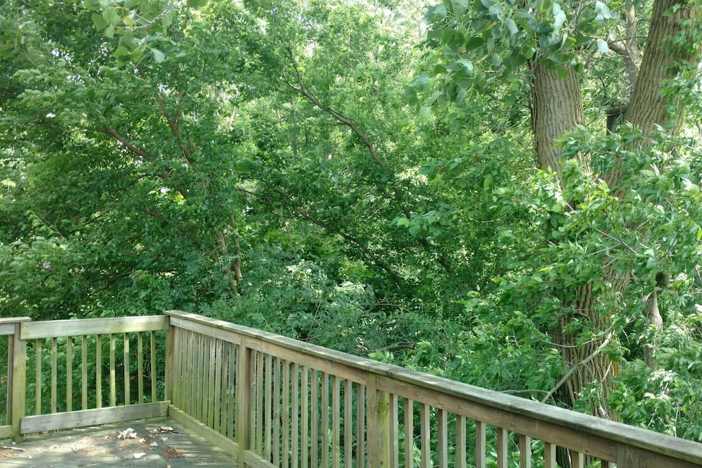 Top Deck view of Trees