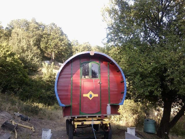Beautiful Vardo, horse drawn wagon, organic farm