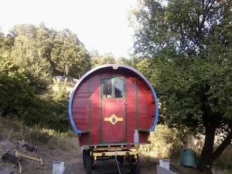 Beautiful Vardo, horse drawn wagon, organic farm