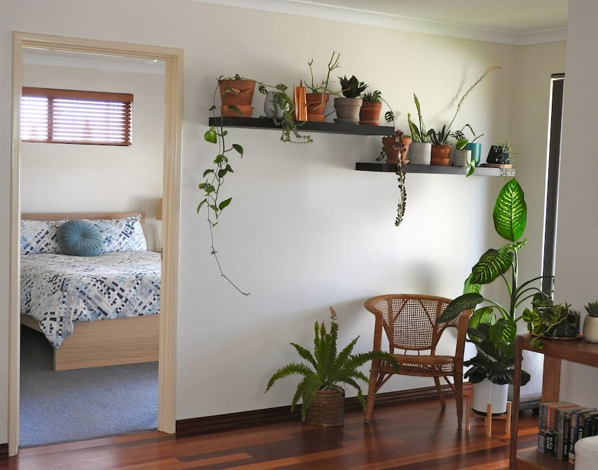 Healthy house plants throughout the house.