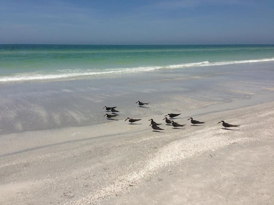Steps from soft white sand and teal waters from the Gulf of Mexico