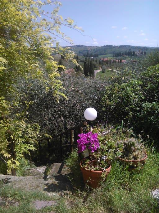 Matrimonio Tra Gli Ulivi Toscana : Tra gli ulivi di certaldo appartamenti in affitto a