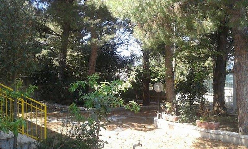 giardino pavimentato  ed alberato