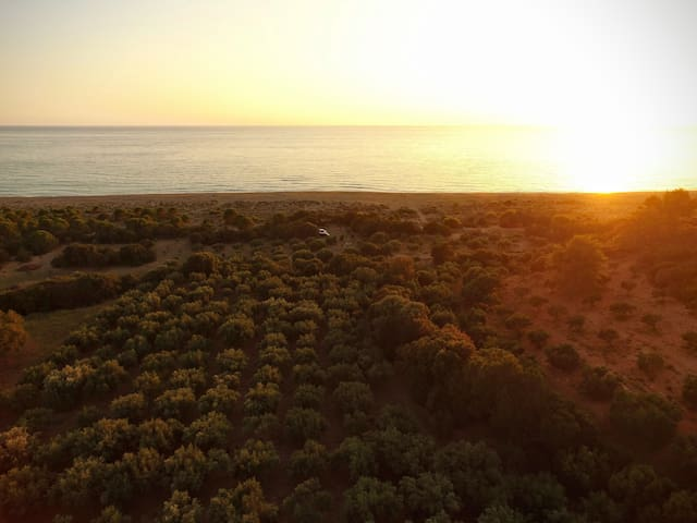 The Olive-tree grove from above
