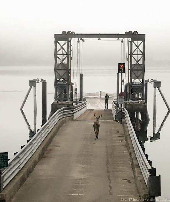 Welcome to the Herron Island Ferry. You're about to visit a VERY special place.