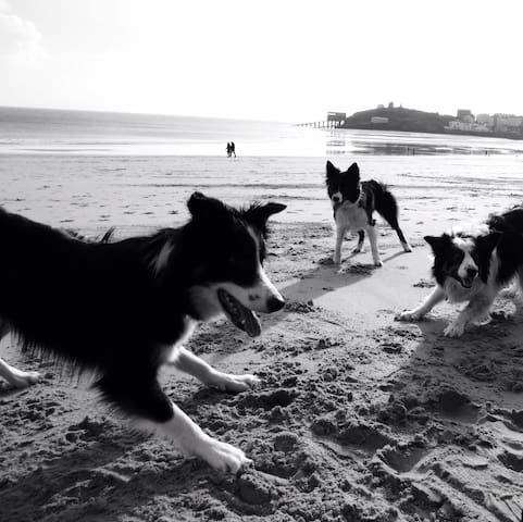 Doggie heaven at Dolphin apartment - Tenby - Daire