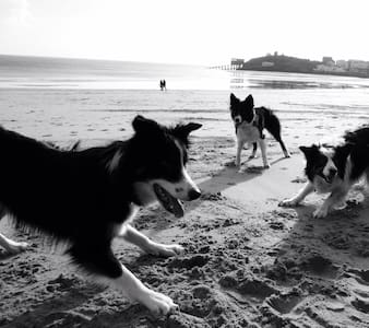 Doggie heaven at Dolphin apartment - Tenby - Apartamento