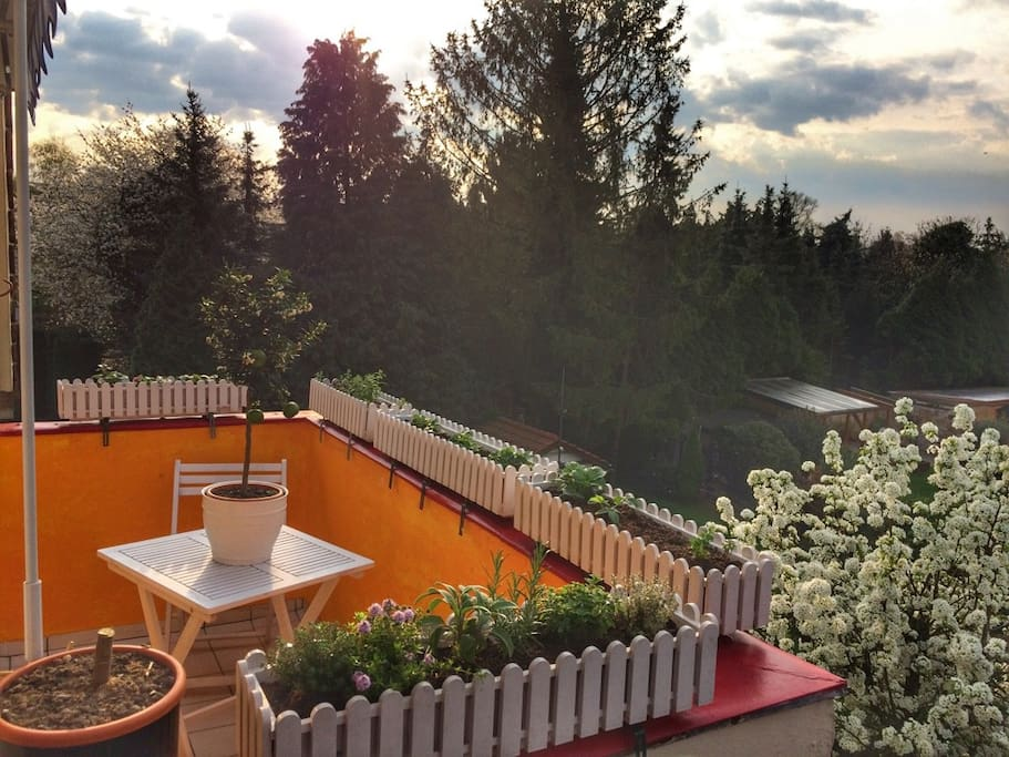 Chill out in the sun: Southside balcony with fresh herbs and fruits all sommer long