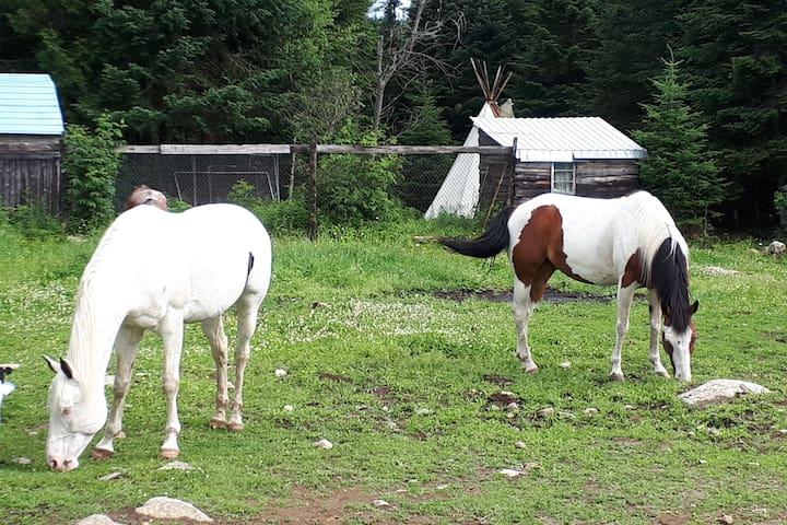 """La Cabane """"Soleil"""" entourée des chevaux"""