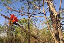 Currajong... enjoy bush walks