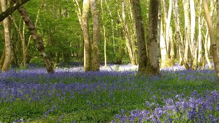 CAMPING near woodland surround. Great for hikers