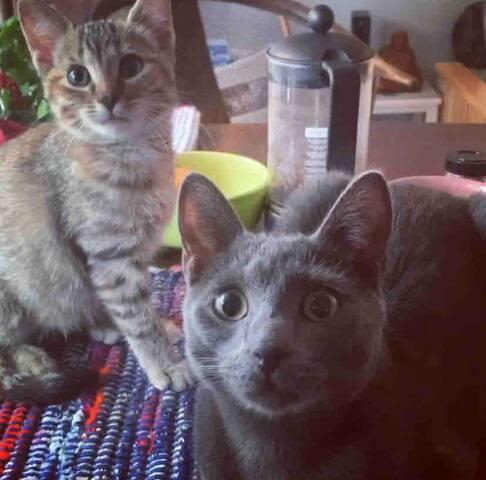 THE VEGAN PSYCHIC CATS & TEA WOMEN ISLAND RETREAT