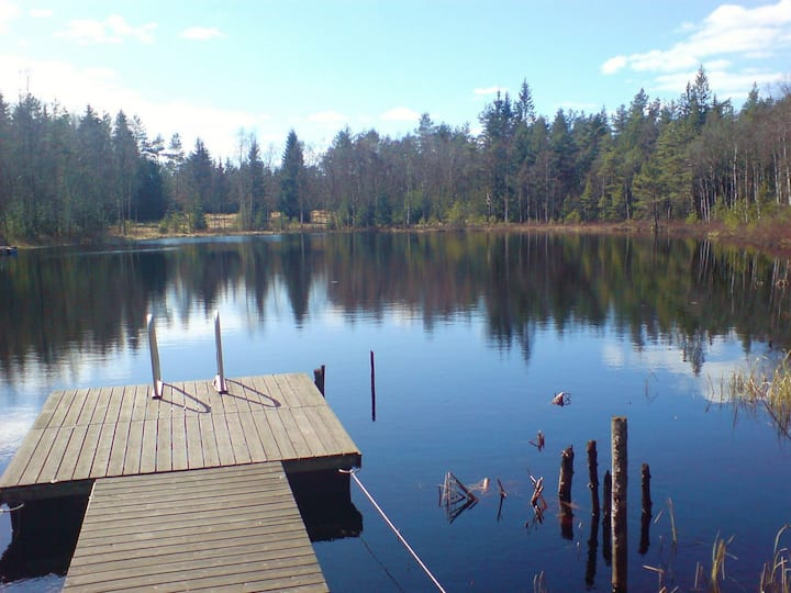 Lugn och ro i en svensk skog