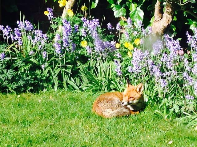 Beautiful kingsize with flower garden