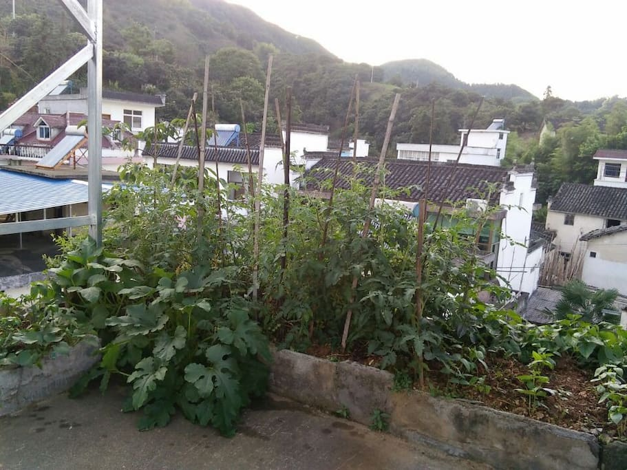 屋顶的菜园