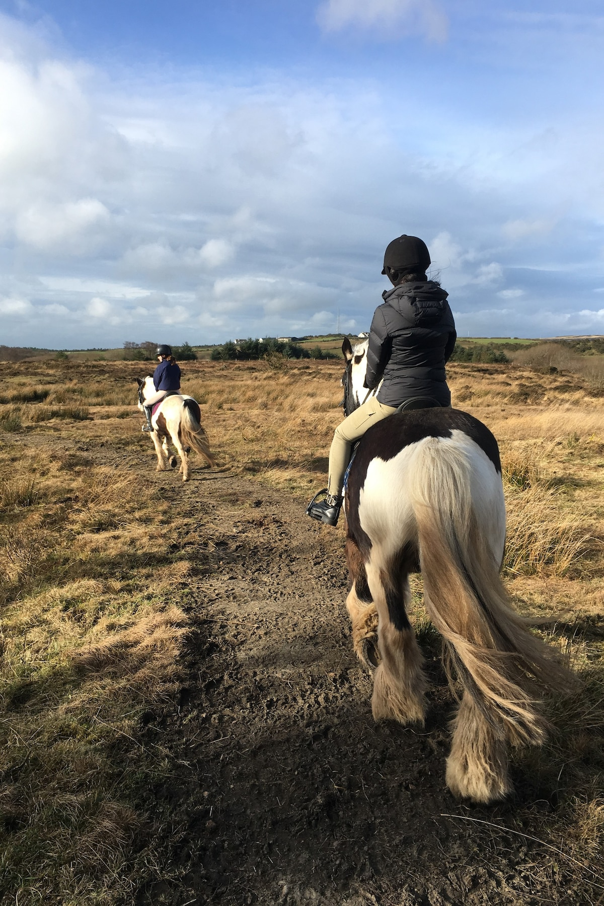 Horse Riding With Experienced Equestrian Airbnb
