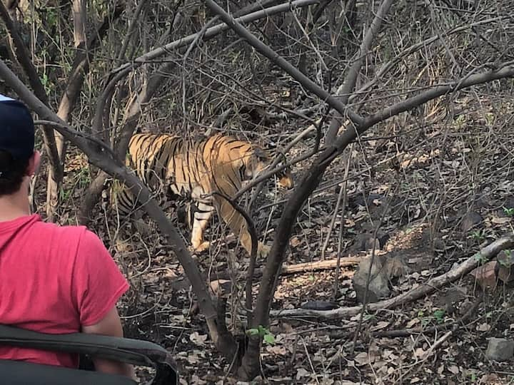 Tiger spotted by our  guests