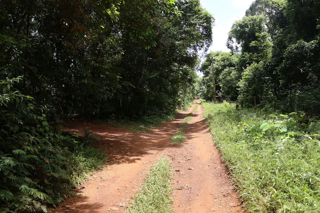 Estrada de Acesso