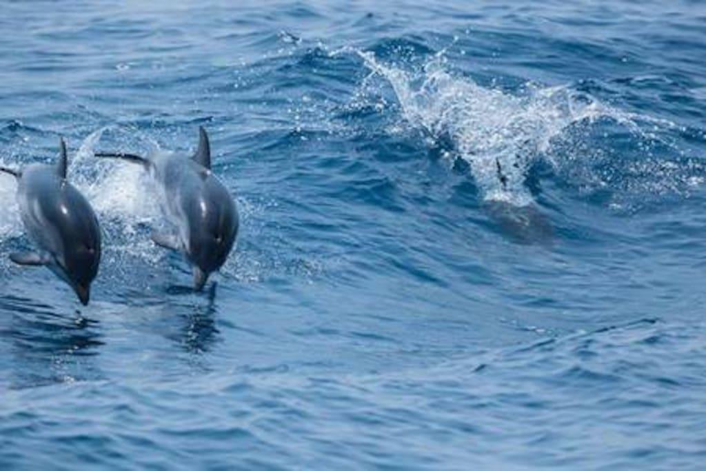 "Whale-watching in the Ligurian sea (""Santuario dei cetacei"")"