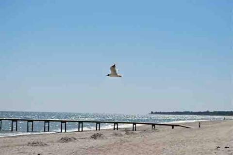Mysig stuga nära strand och salta havsbad!