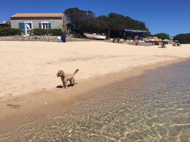 Santa Teresa Gallura Capo Testa  sulla spiaggia