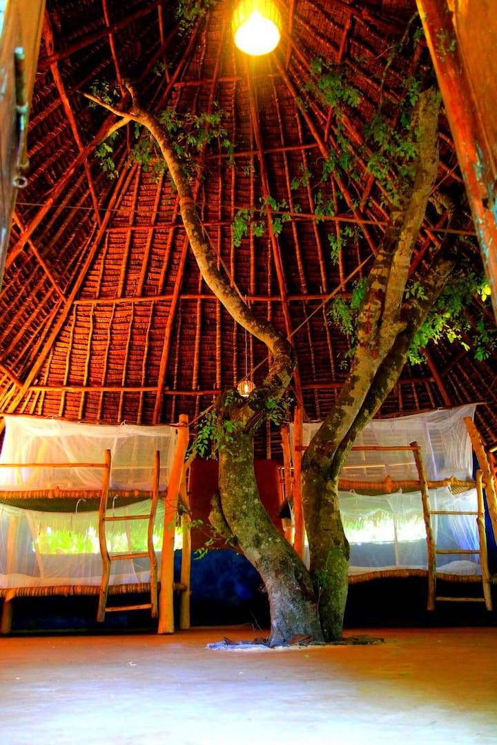 Distant Relatives Ecolodge: Shared Dorm