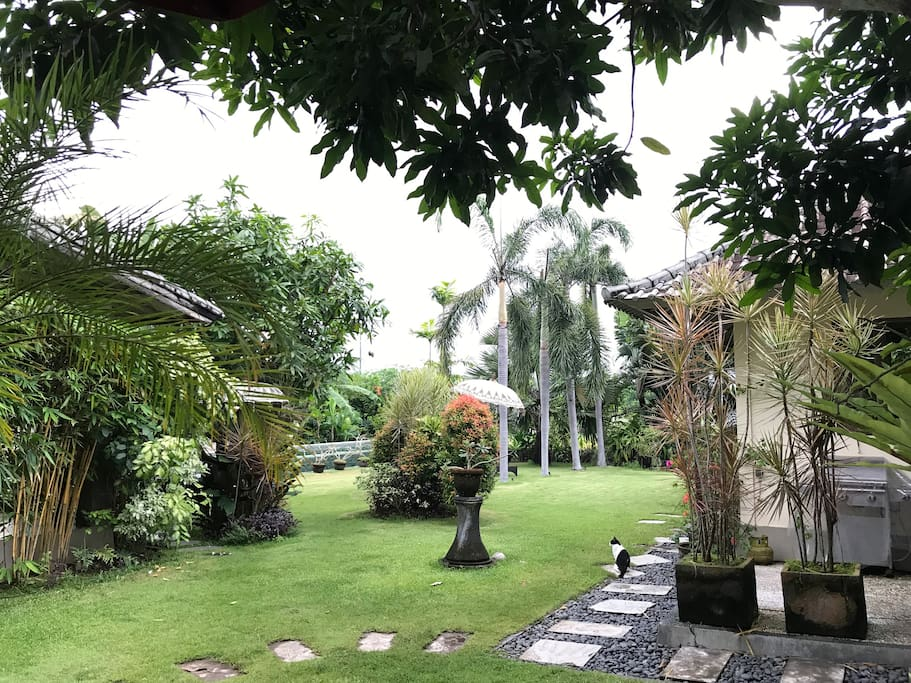 Our spacious tropical garden