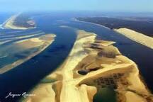 Depuis le débarcadère les bateliers d'Arcachon peuvent vous laisser une journée sur le banc d'Arguin , face à la dune du Pyla, c'est juste un paradis.