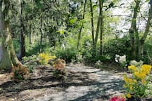 The Rhododendron garden next tot he tiny house.