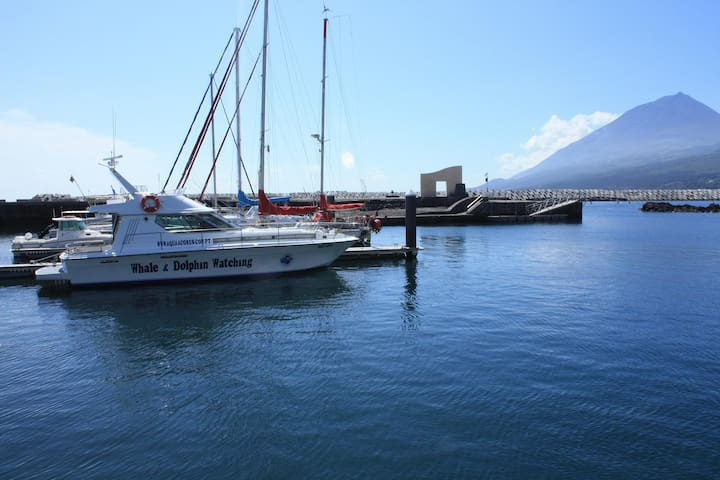 Aqua Açores - Moby Dick - Lajes Do Pico - Barco