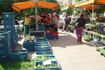 """Local """"Farmers market Tylovo namesti"""" - 5 minutes walk from our apartment"""