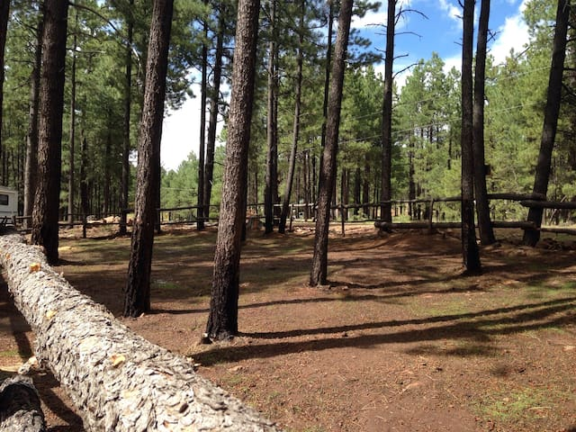 Forest Lakes RV/Camping Space, Horses Welcome