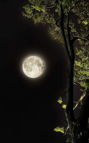 The Oakcliff Moon