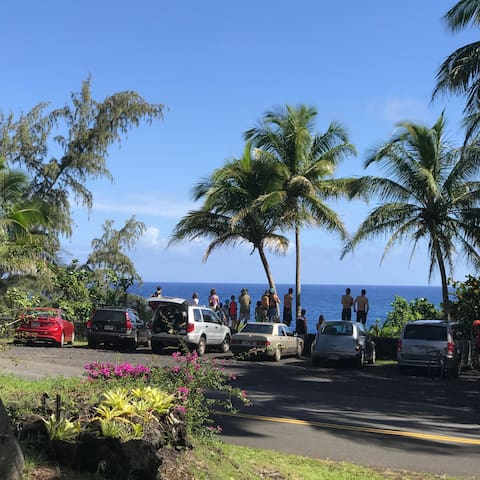 Tourists Whale Watching from Kehena Beach lookout - across the street from our cottages. Whales & dolphins are often seen from cottage lanai.