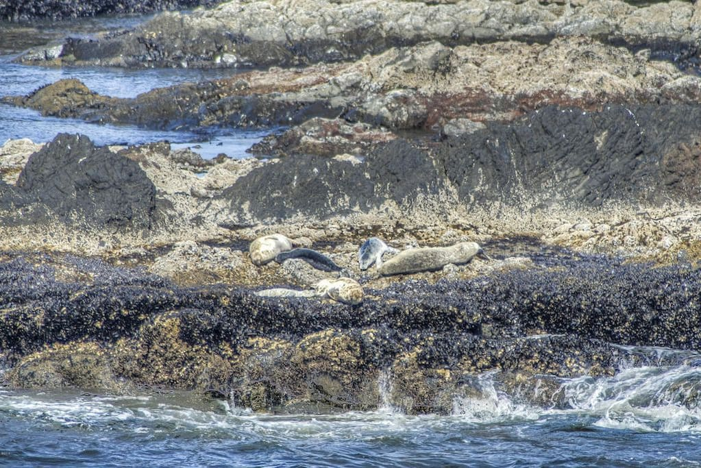 New seal pups and their moms