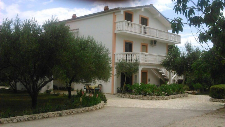 Apartment Marija 1 on island Vir with olive garden
