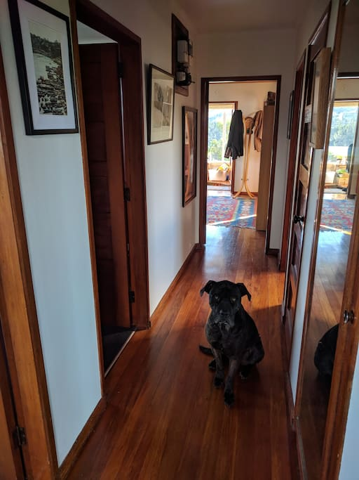 Entrance hall, combined with super friendly dog.