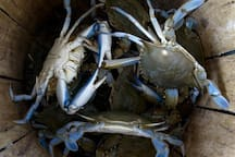 Take a stab at crabbing! We have crab pots available for guests.