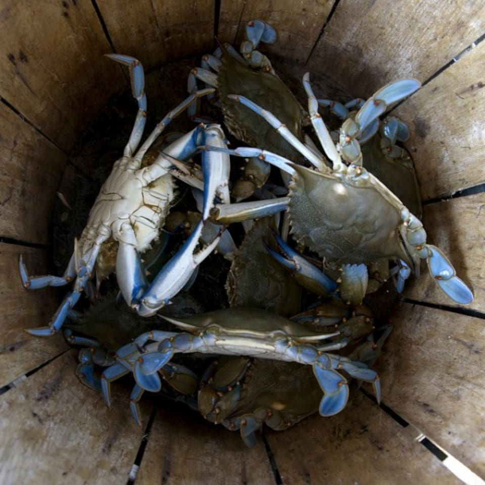 Catch your own crabs! We have crab pots available for guests.