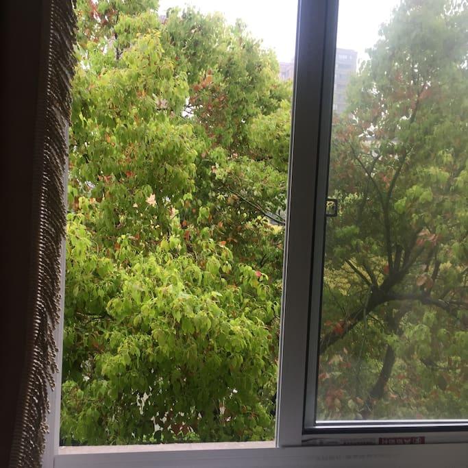 窗外触手可及的绿色