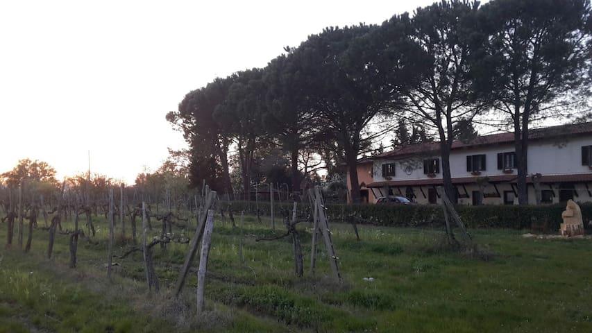 Casavacanze Agrivacanze Artenatura App. Giallo