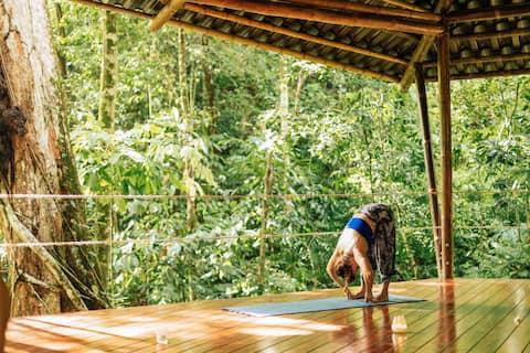 Apartamento en la selva: yoga, piscina, senderos, estacionamiento