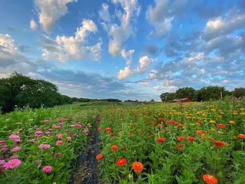 PepperHarrow Flower Farm Stay (Glamping Tent)
