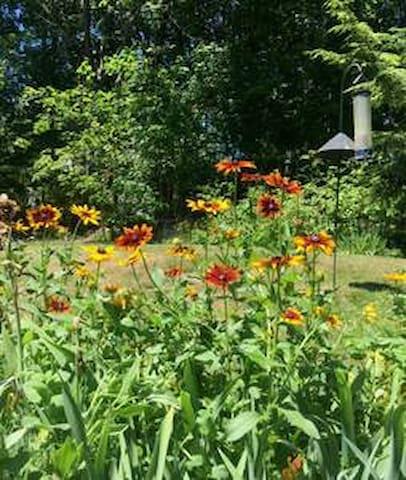 Summer backyard view