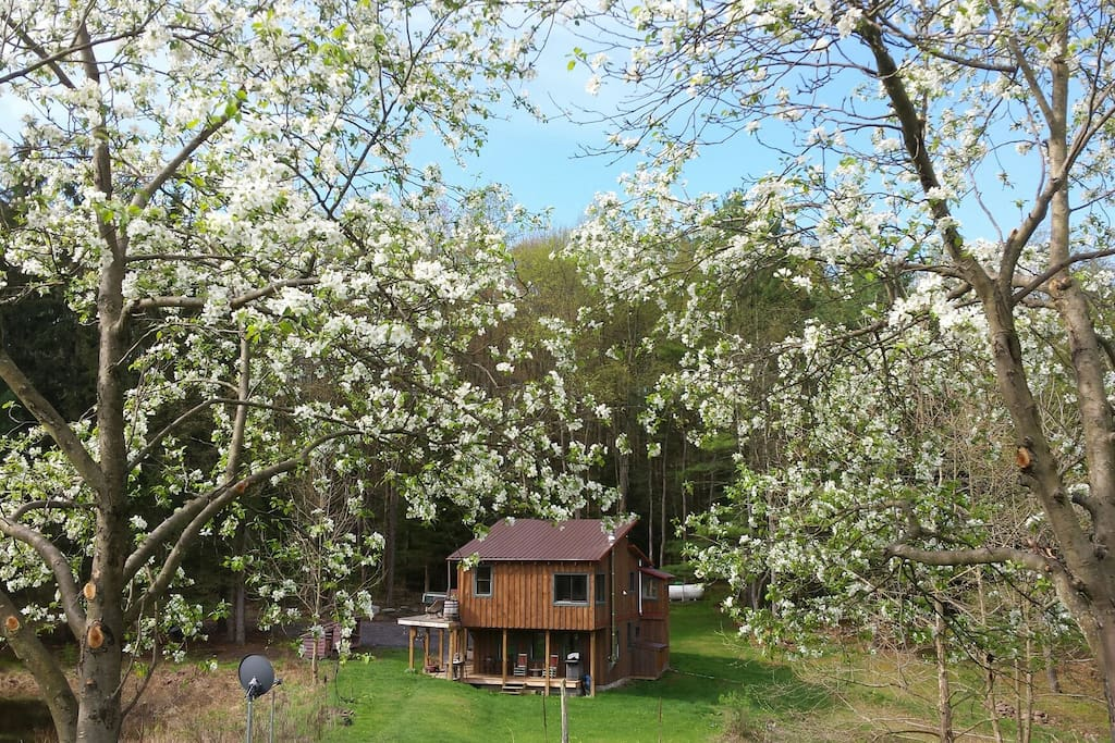 View of the cabin from the orchard in spring