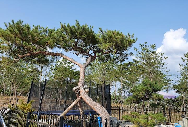 재방문율 높은 ''달빛정원''에서 사랑하는 사람들과 감성캠핑과 놀이를 모두 즐겨보세요.♡