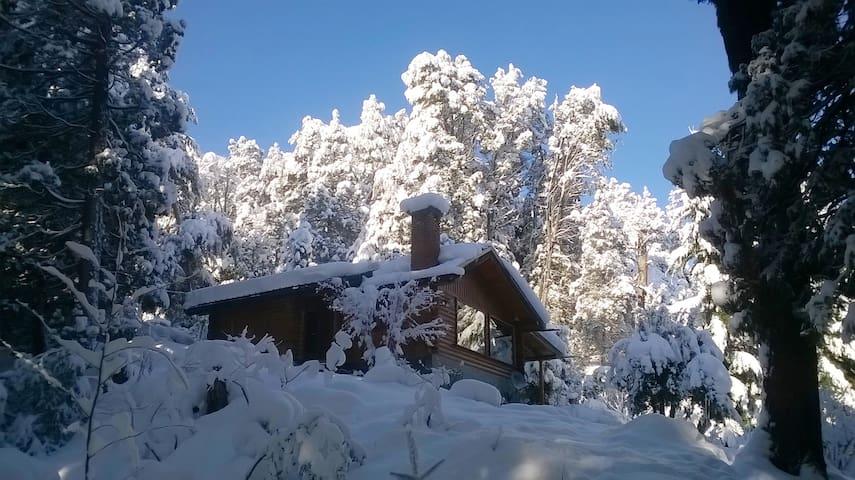 Cálida Cabaña en bosque nativo.