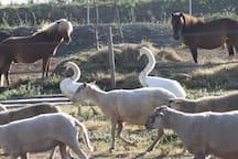 Les animaux du Haras