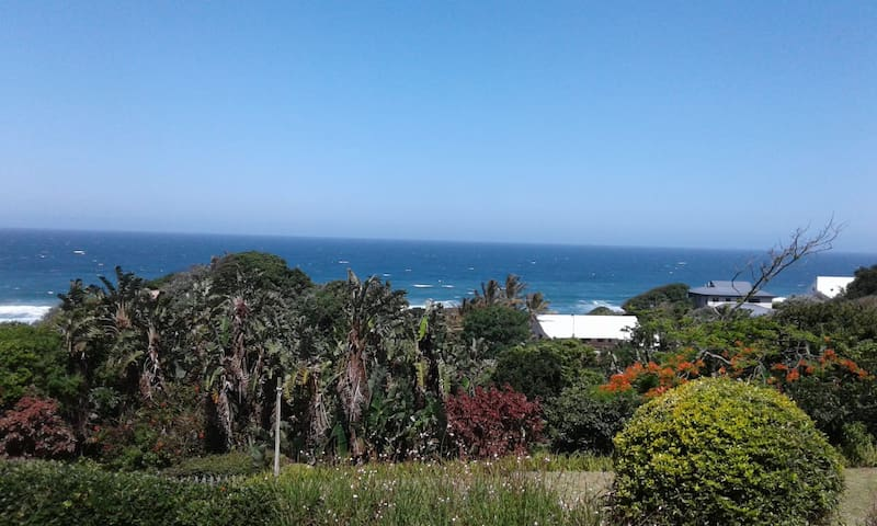 WHALES VIEW